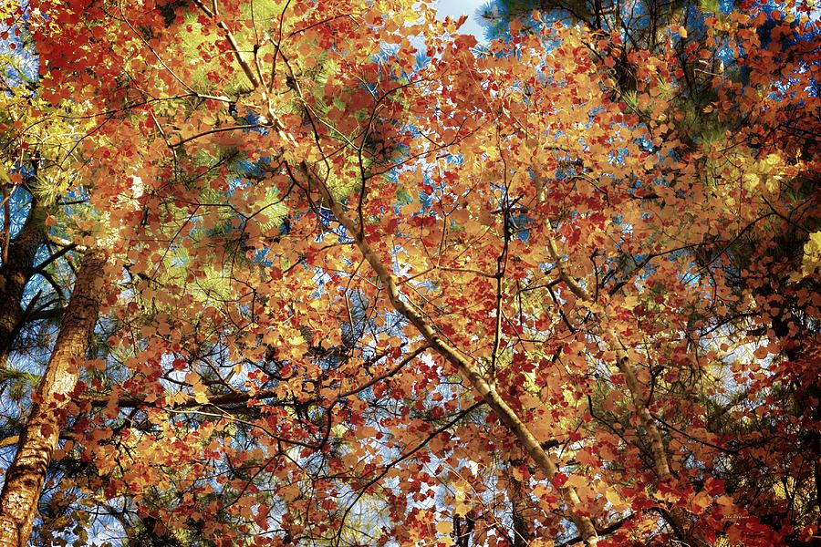 Autumn Colors in North Carolina by John Pagliuca