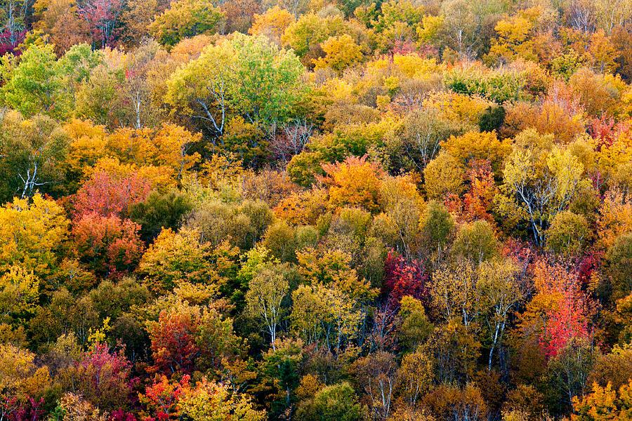 Autumn Photograph - Autumn Colors by Matt Dobson