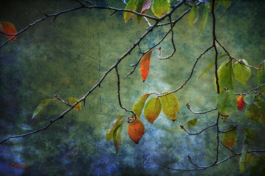 Autumn Colours by Eena Bo
