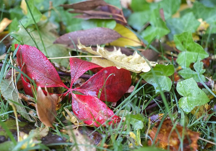 Autumn Photograph - Autumn Colours   by Ivelin Donchev