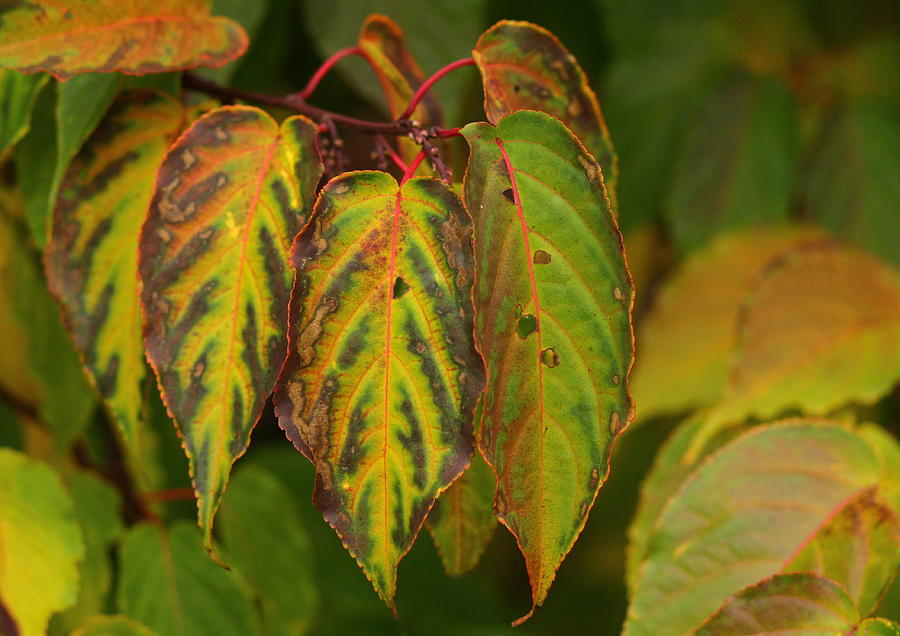 Green Photograph - Autumn Colours by Jacqui Collett
