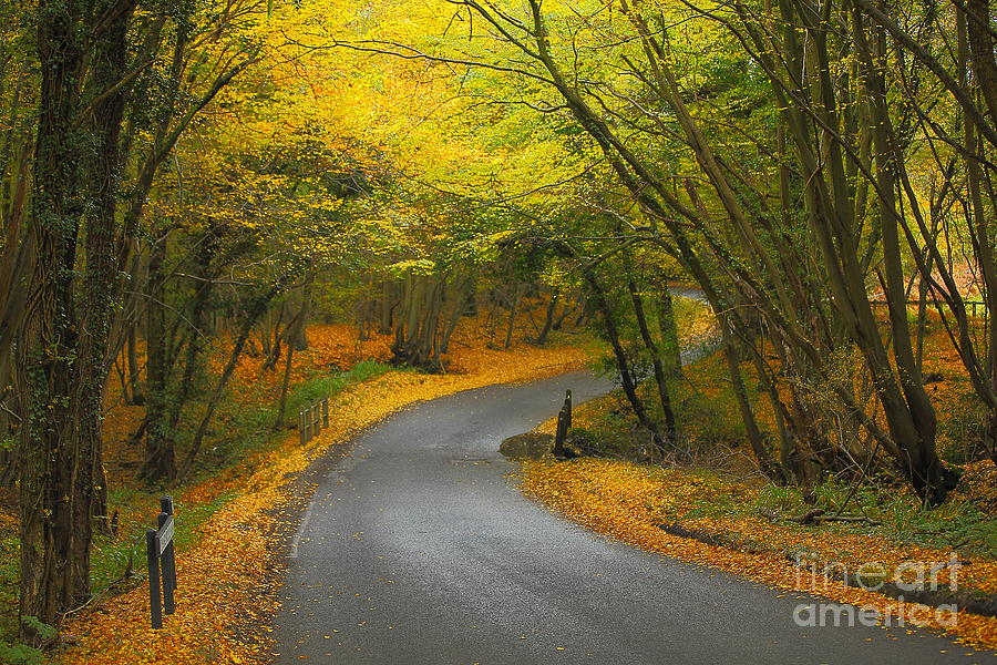 Autumn Photograph - Autumn Colours by Stephen Dowdell