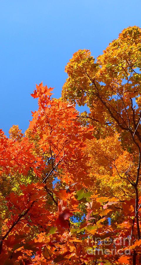 Autumn Photograph - Autumn Contrasts by Cristina Stefan