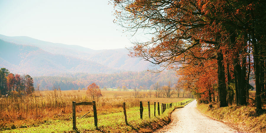 Autumn Country Road In The Forest Photograph by Moreiso