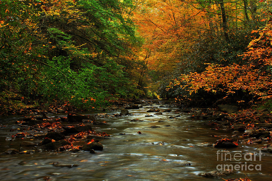 Landscape Photograph - Autumn Creek by Melissa Petrey