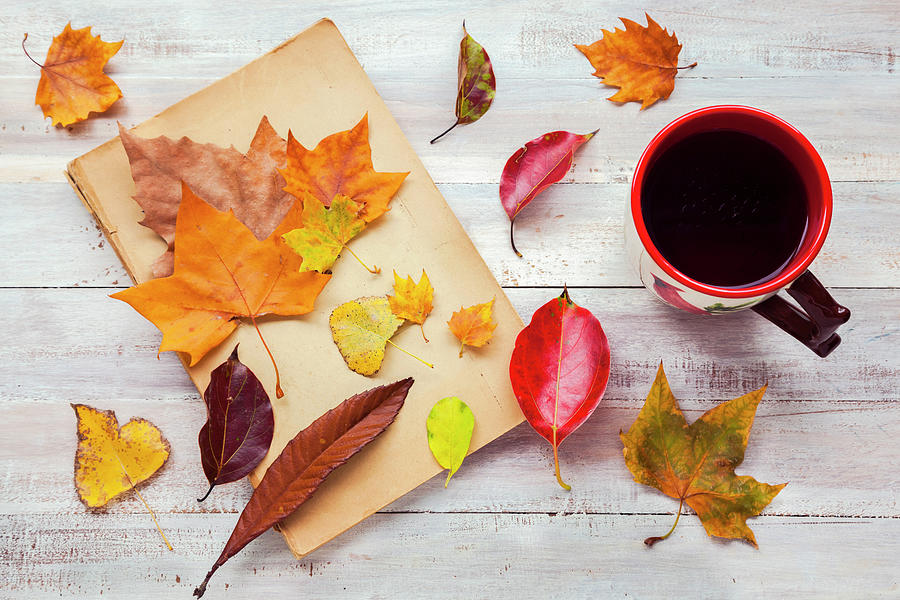 Autumn Cup Of Tea Photograph by Flavia Morlachetti