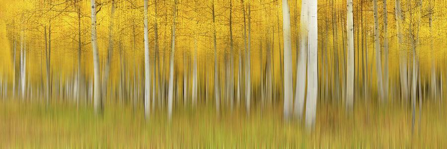 Summer Photograph - Autumn Dream by Mei Xu