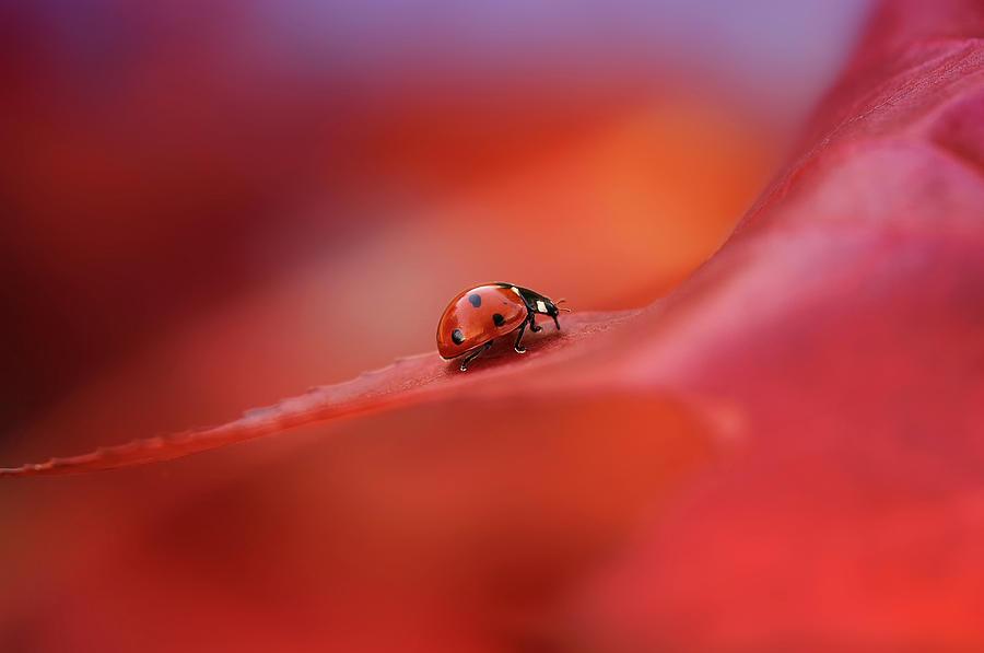 Red Photograph - Autumn by Ellen Van Deelen