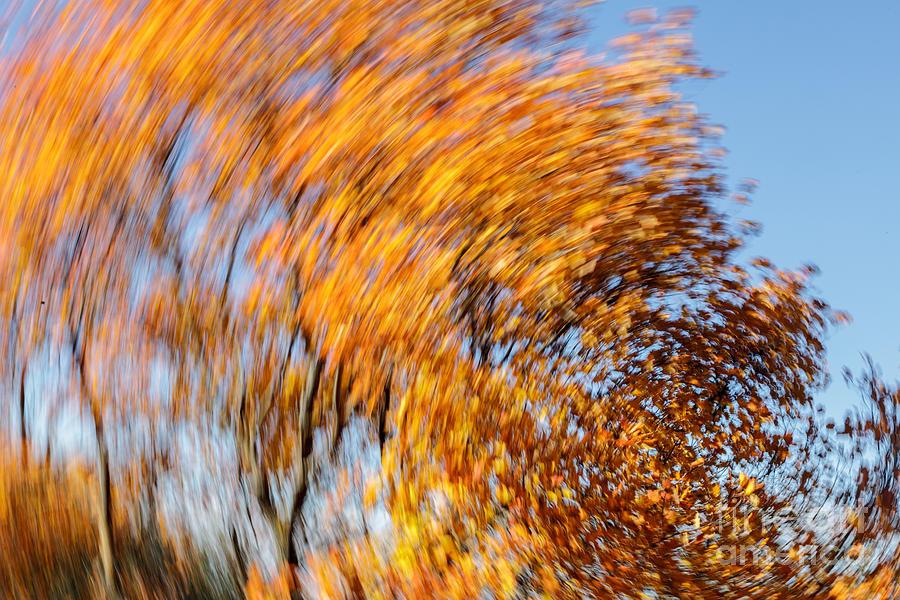 Autumn Photograph by Eugenio Moya