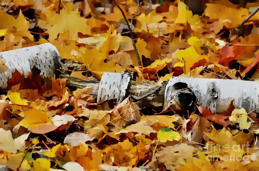 Autumn Photograph - Autumn Fallen Birch  by Andrea Kollo