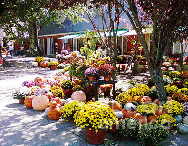 Autumn Photograph - Autumn Farmers Market By Karen E. Francis by Karen Francis