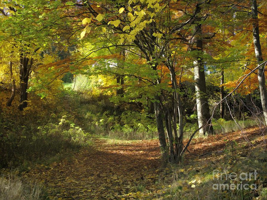 Baar Photograph - Autumn Feeling by Lutz Baar