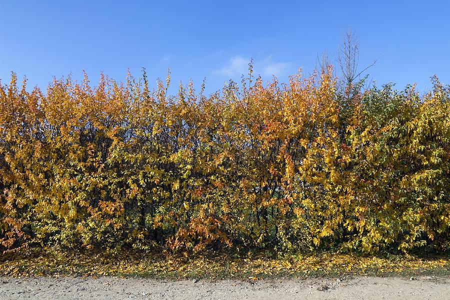 Autumn Photograph - Autumn Fence by Aleksandr Volkov