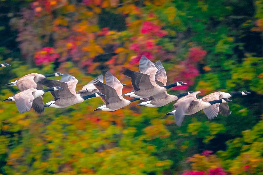 Animals Photograph - Autumn Flight by Brian Stevens