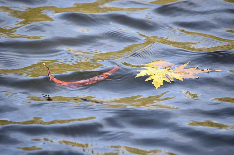 Autumn Photograph - Autumn Floats Away by Bonfire Photography