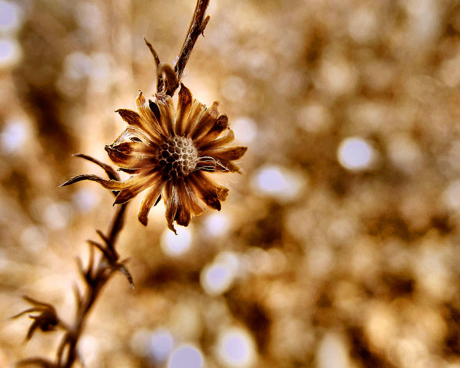 Macro Photograph - Autumn Flower by Stephanie Hollingsworth
