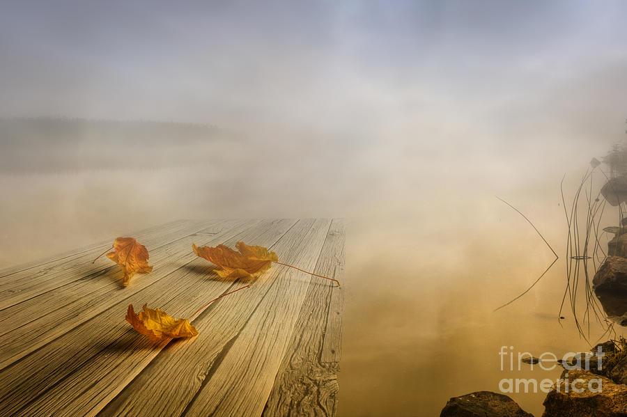 Artist Photograph - Autumn Fog by Veikko Suikkanen