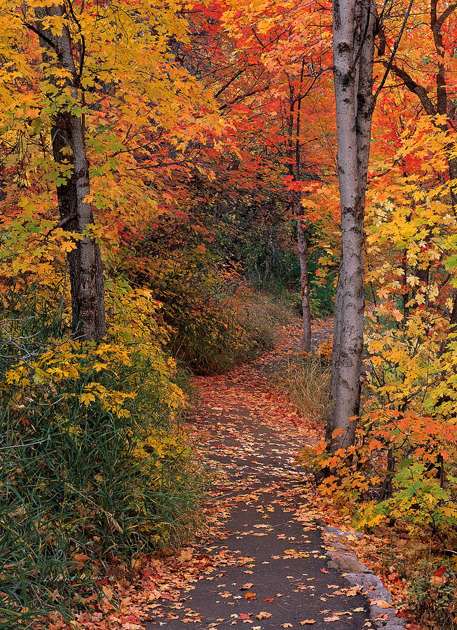 Aspen Forest Photograph - Autumn Foot Path by Leland D Howard