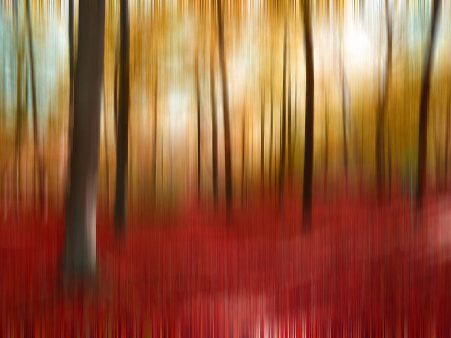 Abstract Photograph - Autumn Forest by Angela Bruno