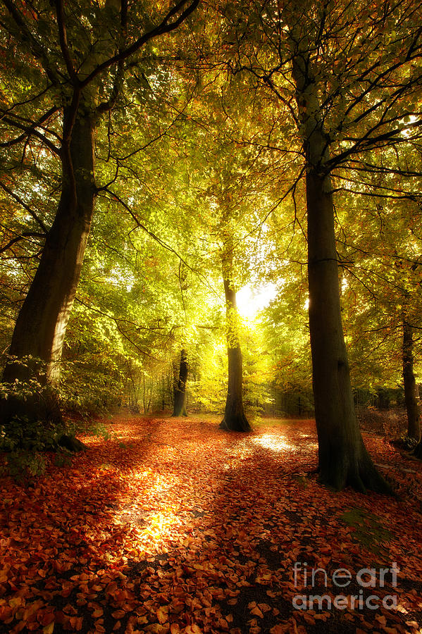 Autumn Forest Photograph - Autumn Forest by Boon Mee