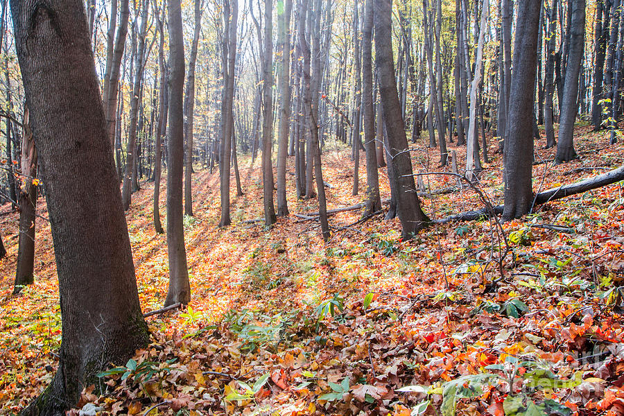 Fall Photograph - Autumn Forest by Jivko Nakev