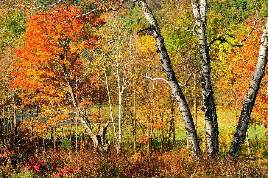 Scenic Landscape Photograph - Autumn Forest Scene - Litchfield Hills by Expressive Landscapes Fine Art Photography by Thom