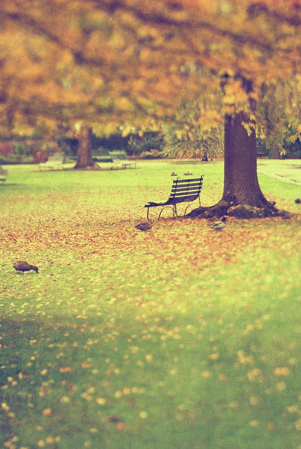 Autumn Gardens Photograph by Jill Ferry