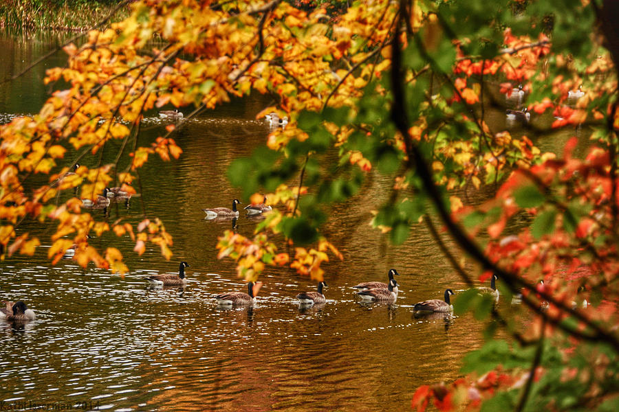 Landscapes Photograph - Autumn Geese Abstract by Kathi Isserman
