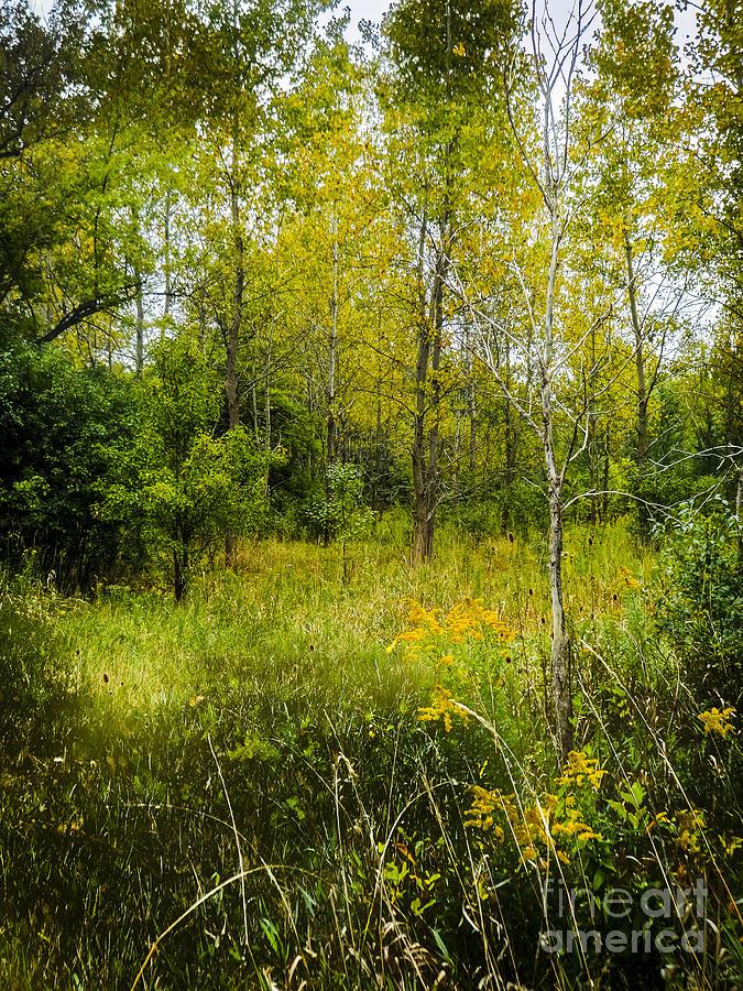 Robert gardner reserve