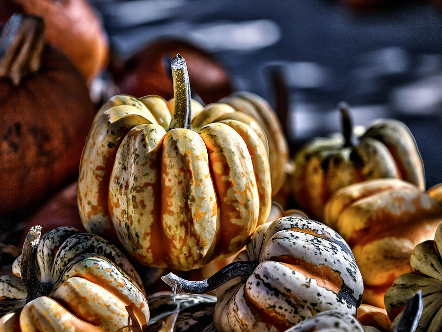Squash Photograph - Autumn Glow by Caitlyn  Grasso