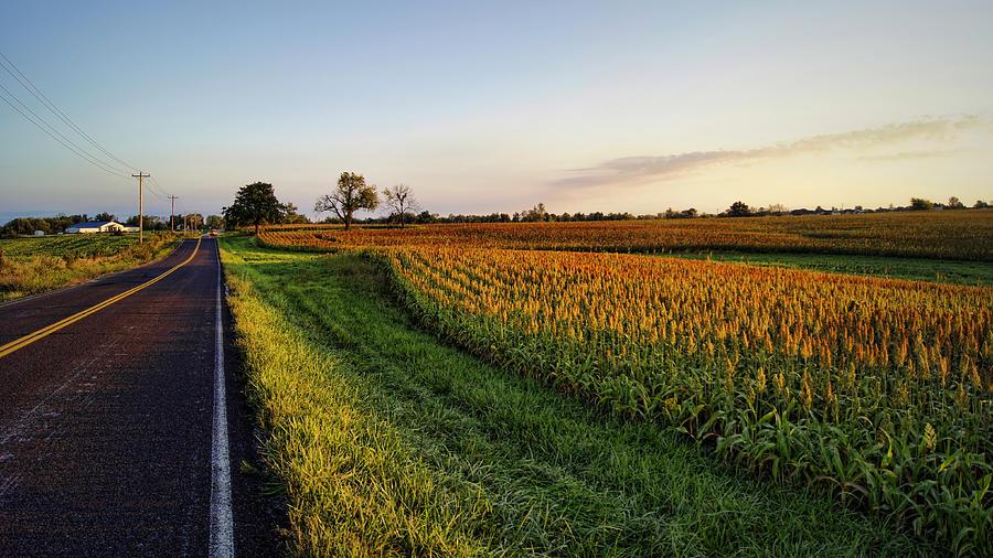 Milo Photograph - Autumn Gold by Cricket Hackmann