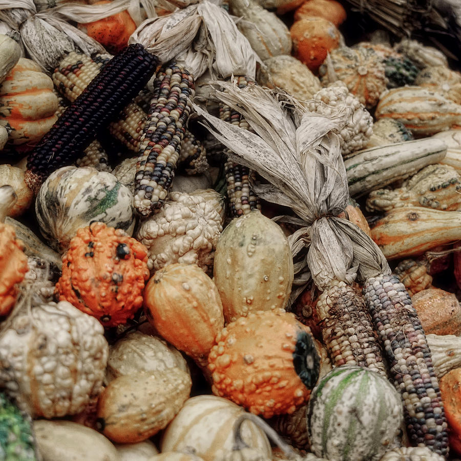 Vegetable Photograph - Autumn Gourds 2 by Joann Vitali