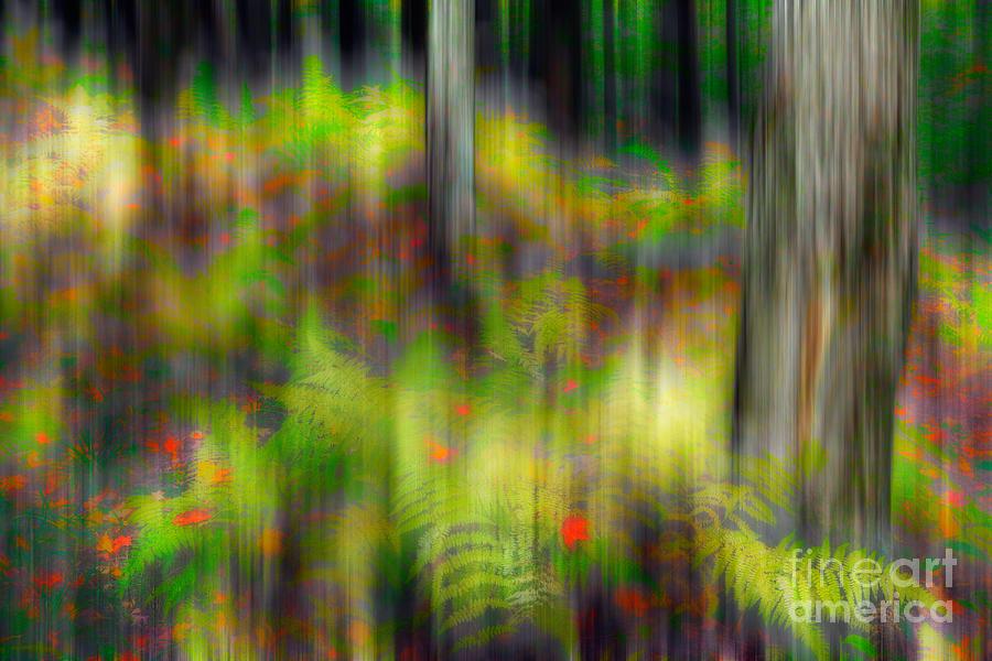 West Virginia Painting - Autumn Grace - A Tranquil Moments Landscape by Dan Carmichael