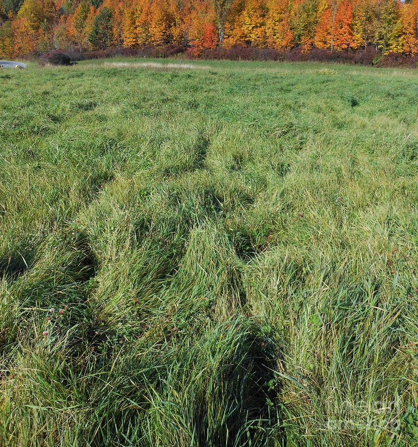 Field Photograph - Autumn Grass by Beebe  Barksdale-Bruner