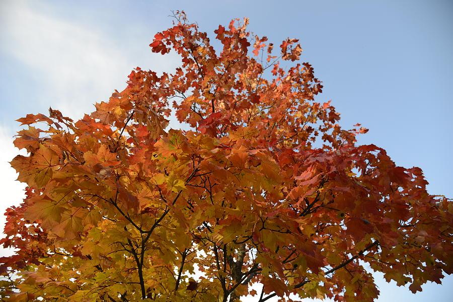 Fine Photograph - Autumn Harmony 1 by Teo SITCHET-KANDA