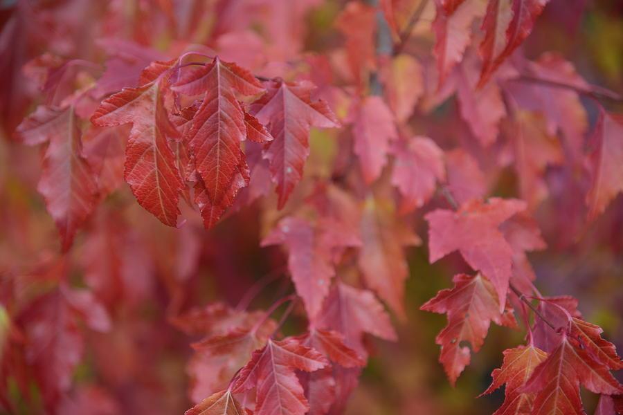 Fine Photograph - Autumn Harmony 2 by Teo SITCHET-KANDA