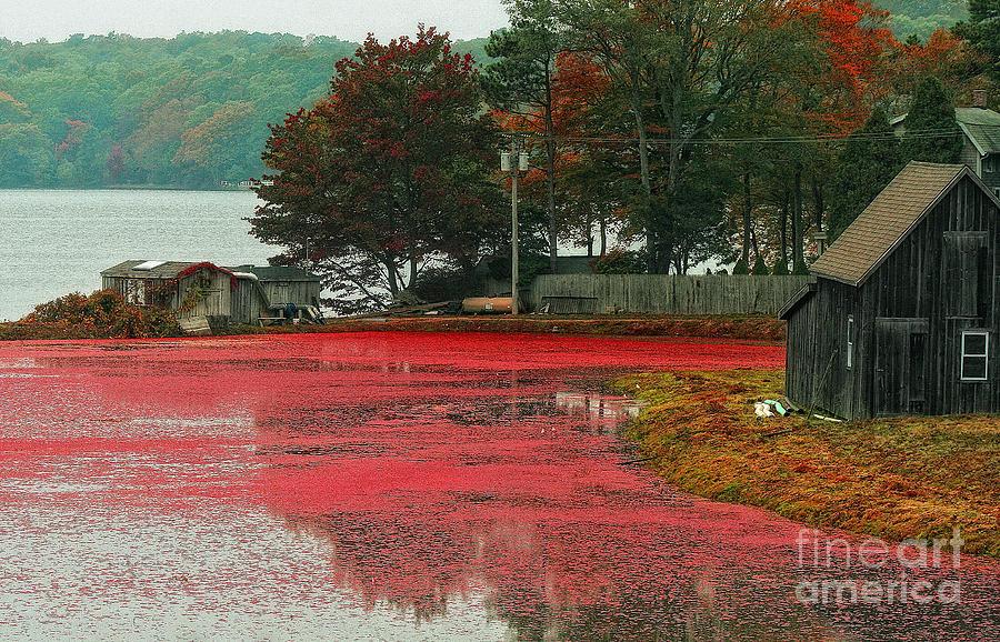 Coastal Photograph - Autumn Harvest by Gina Cormier