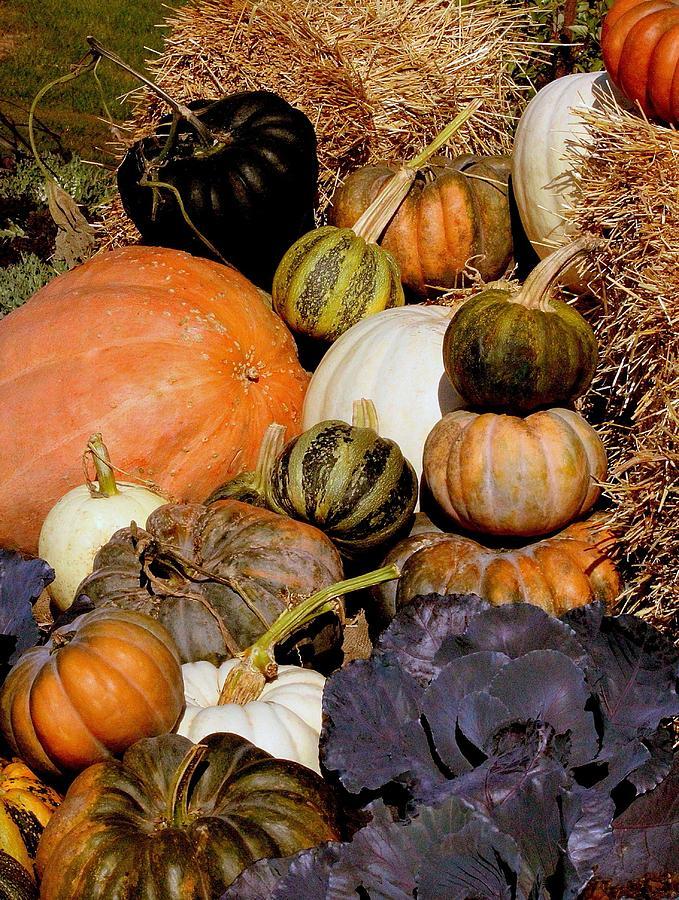 Pumpkin Photograph - Autumn Harvest by Rosanne Jordan