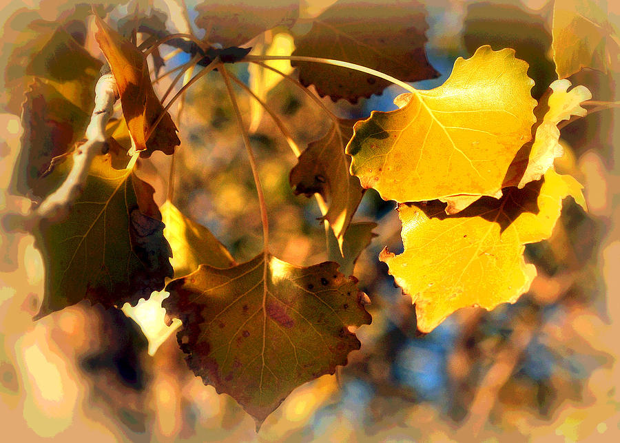 Cottonwood Trees Photograph - Autumn Hearts by Lisa Holland-Gillem