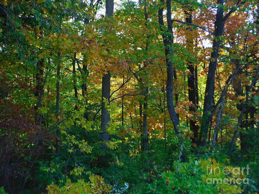 Fall Colors Photograph - Autumn Hilltop  by Paddy Shaffer