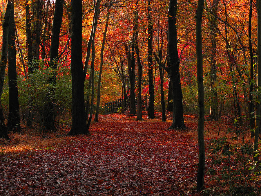 Autumn Photograph - Autumn IIi by Raymond Salani III
