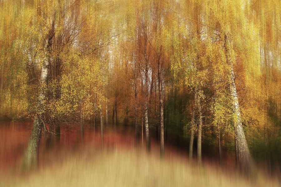 Autumn Photograph - Autumn Impression by Gustav Davidsson