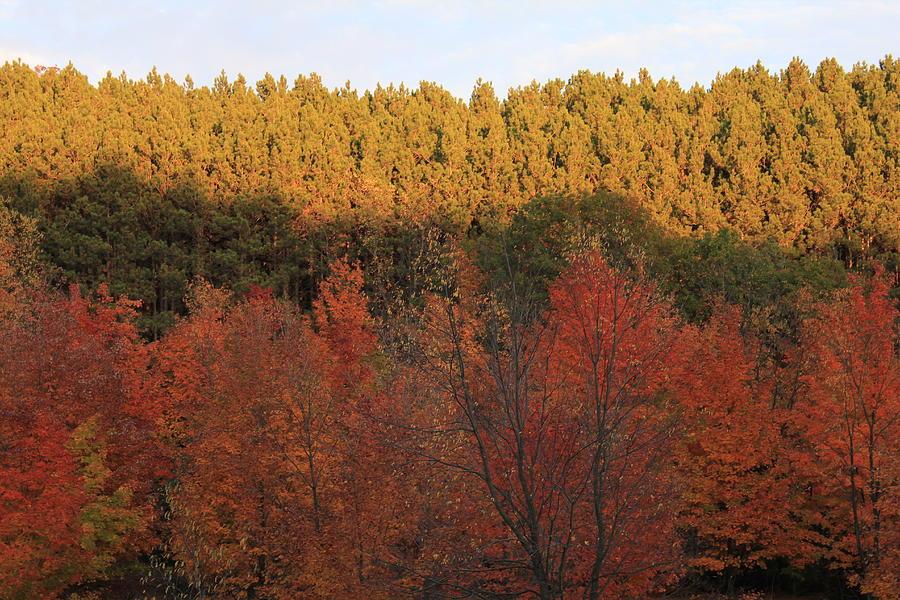 Arcadia Photograph - Autumn In Arcadia by Sheryl Burns