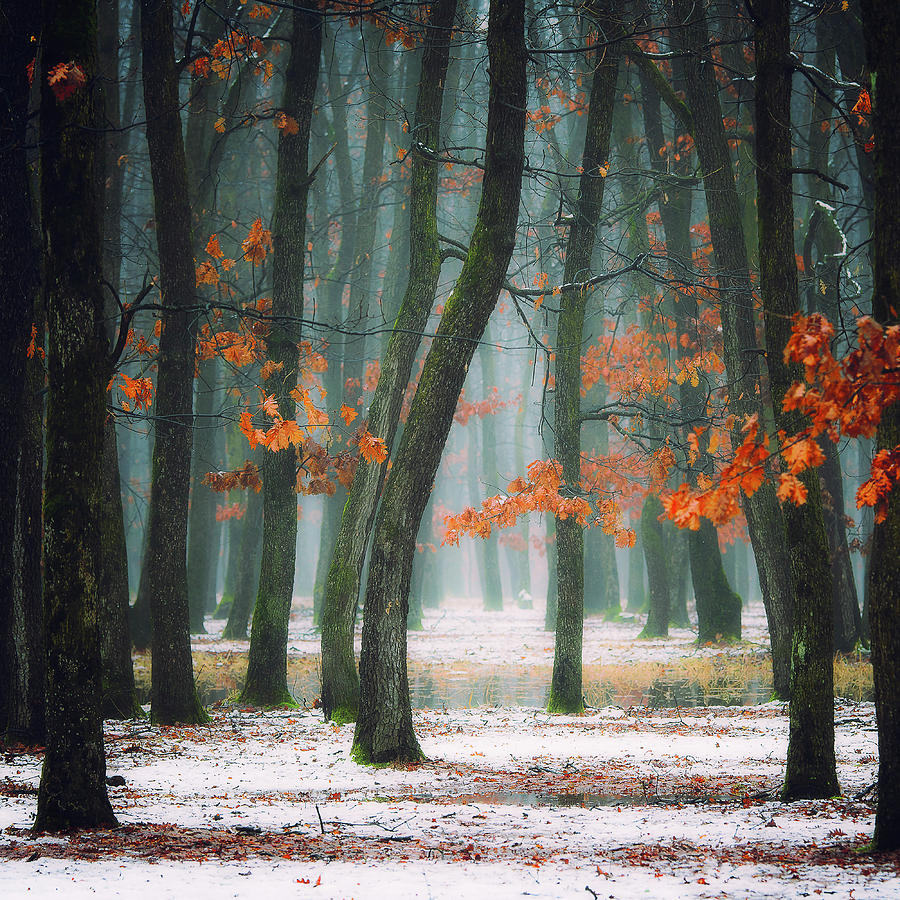 Red Photograph - Autumn In My Soul by Alexandra Fira
