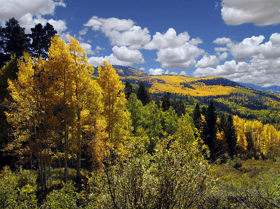 Autumn Photograph - Autumn In New Mexico by Kurt Van Wagner