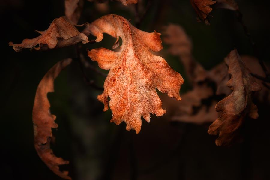 Autumn Photograph - Autumn is in the Air by Tom Mc Nemar