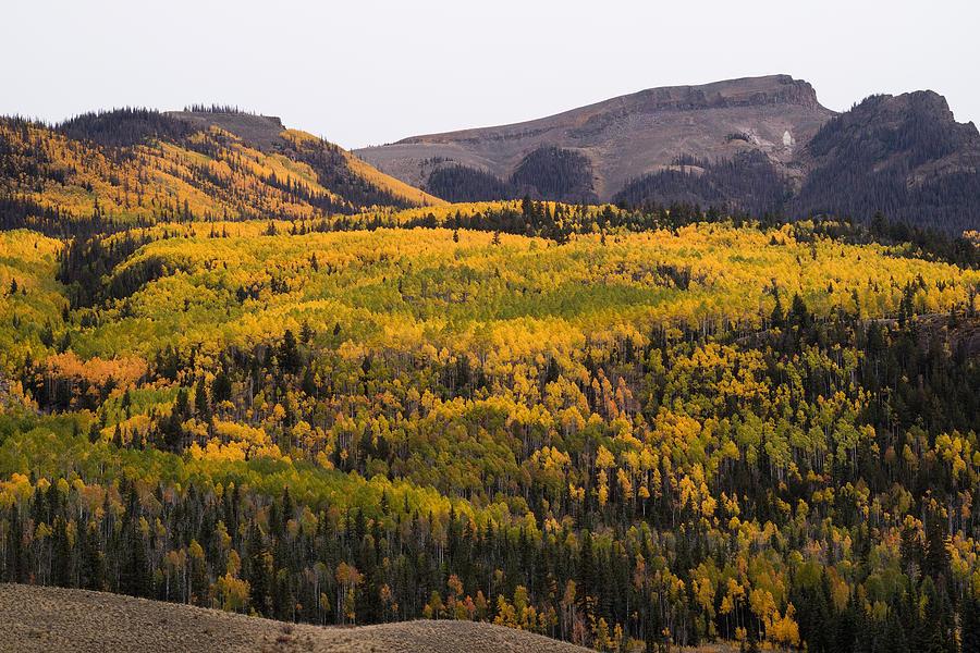 Alpine Photograph - Autumn In The Colorado Mountains by Greg Ochocki