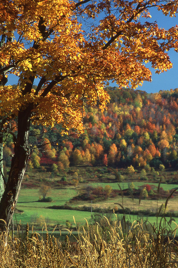 Autumn Photograph - Autumn in the Finger Lakes by Roger Soule