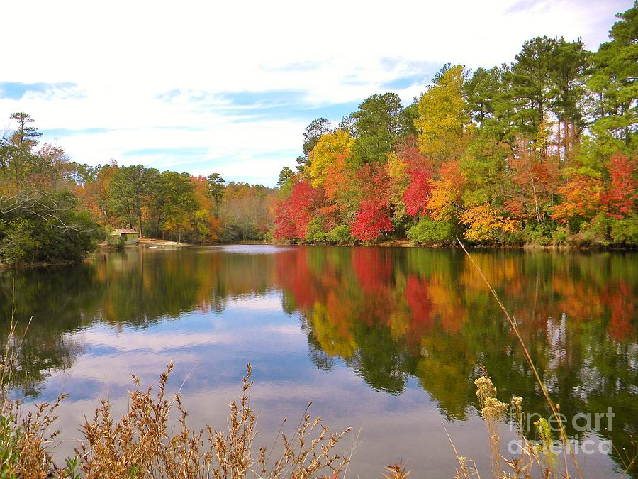 Fall Photograph - Autumn In The South by Matthew Seufer