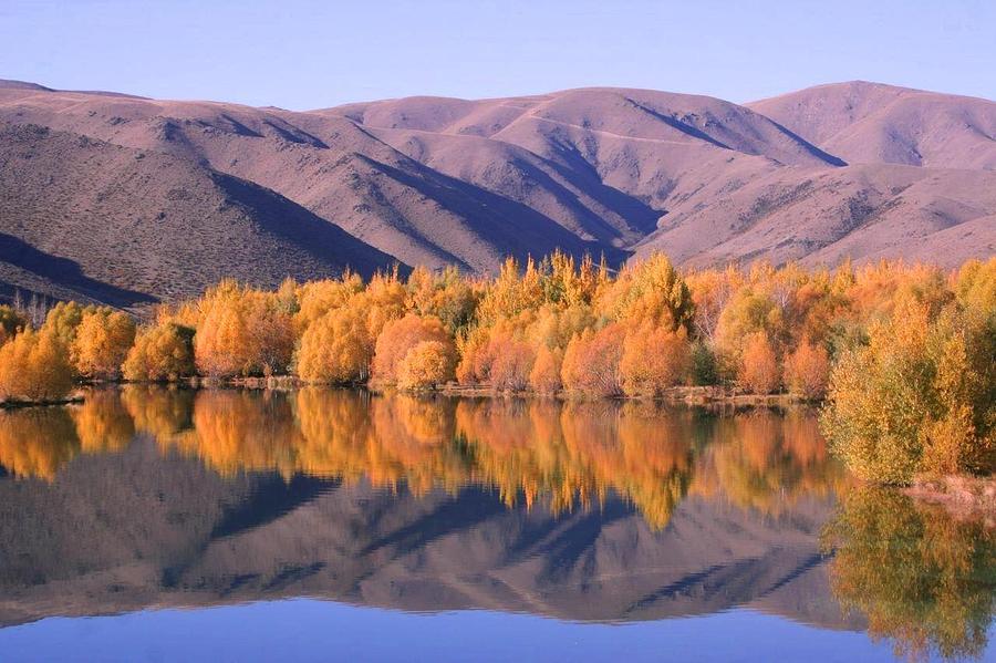 Landscape Photograph - Autumn In Twizel. Nz by Ian Mckendrick